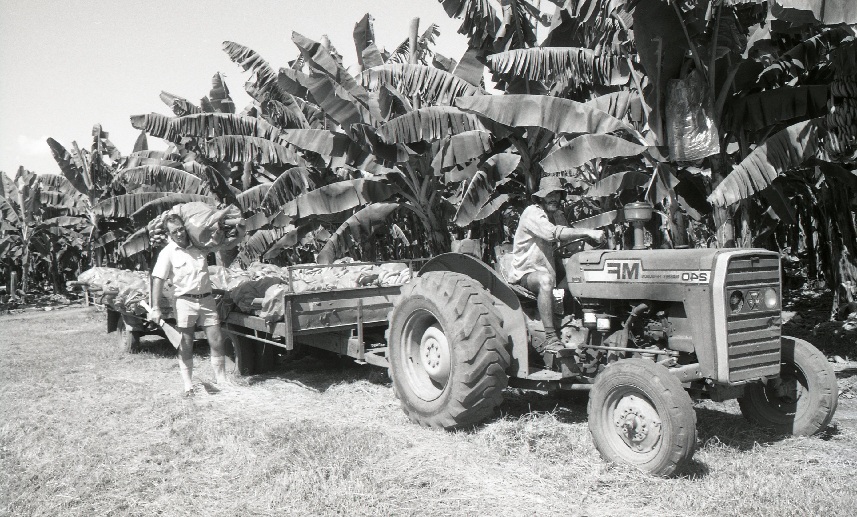 DJ Cormack's banana farm, Humpty Doo, 15 May 1989<br />Image courtesy of Library & Archives NT,  Department of the Chief Minister, NTRS 3823 P1, Box 11, BW2824, Image 21